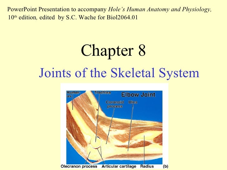 Chapter 8 Joints of the Skeletal System PowerPoint Presentation to accompany  Hole's Human Anatomy and Physiology,  10 th ...