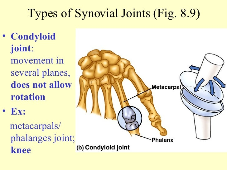Examples of condyloid joint Condyloid Joint Examples