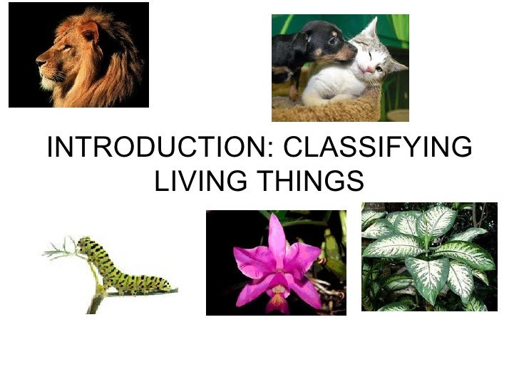 INTRODUCTION: CLASSIFYING      LIVING THINGS