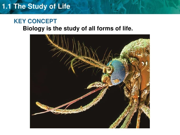 KEY CONCEPT Biology is the study of all forms of life.<br />