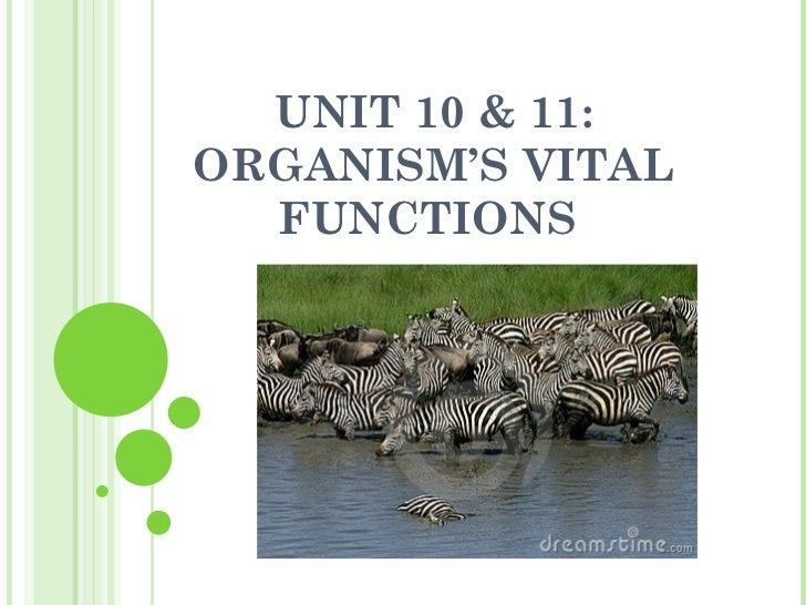 Unit 10 & 11: Organism's vital functions