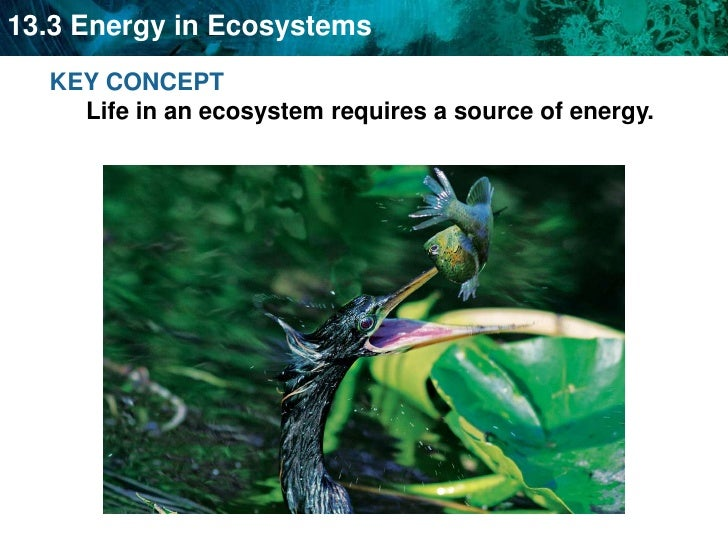 KEY CONCEPT Life in an ecosystem requires a source of energy.<br />