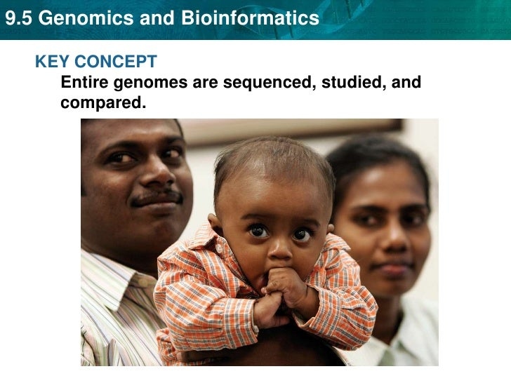 KEY CONCEPT Entire genomes are sequenced, studied, and compared. <br />