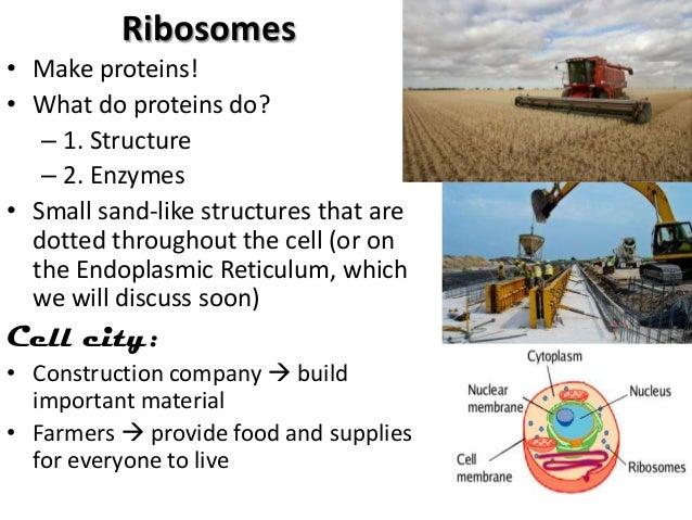 Rough endoplasmic reticulum The cell citys industrial