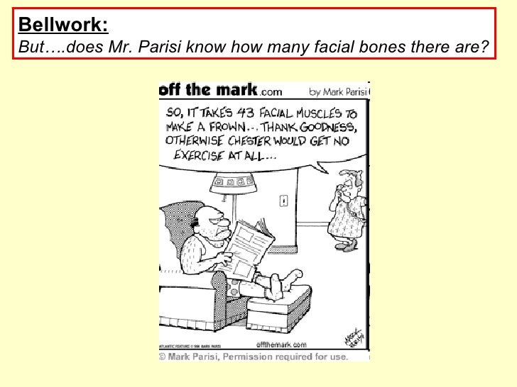Bellwork:   But….does Mr. Parisi know how many facial bones there are?