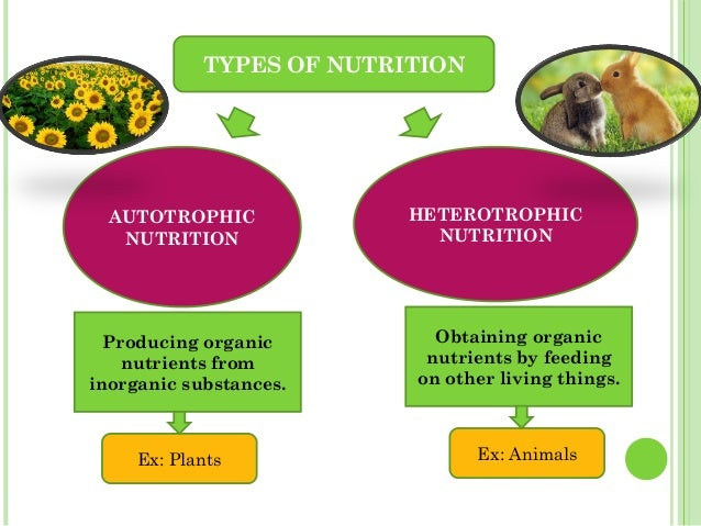 What types of living organisms carry out autotrophic nutrition?