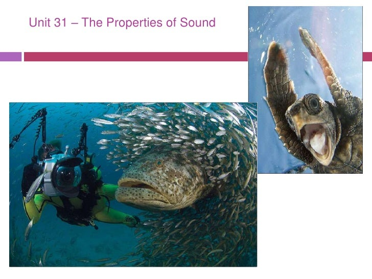 Unit 31 – The Properties of Sound <br />