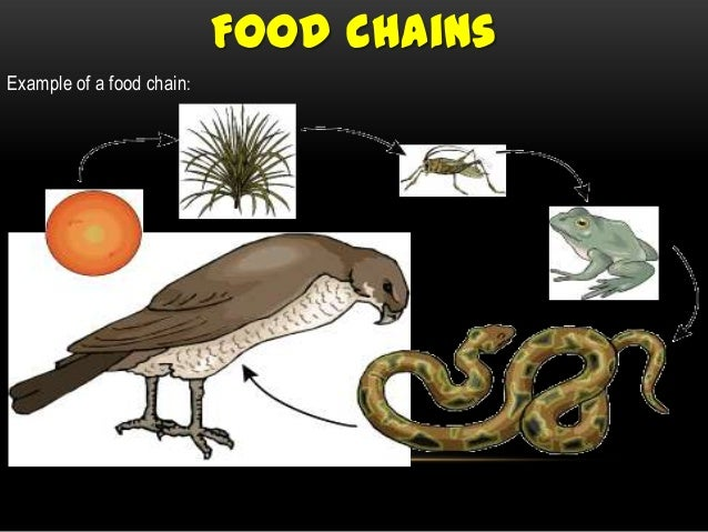 Unit 3 Food Chains Webs on tundra food chain