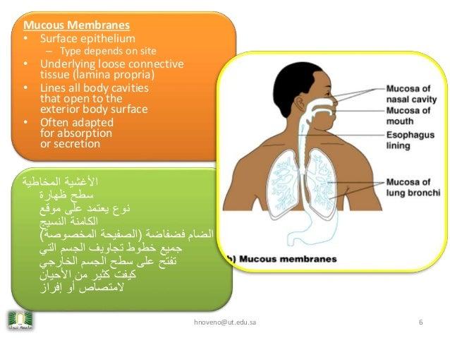 Body Cavity Linings Lines All Body Cavities