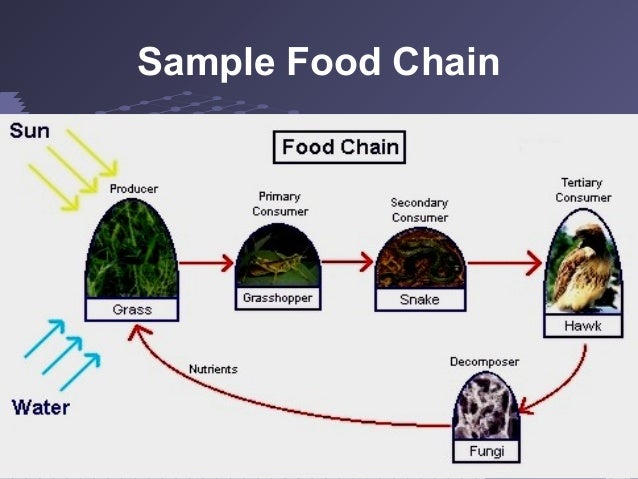 Example Organic Food Draw an Example of a Food