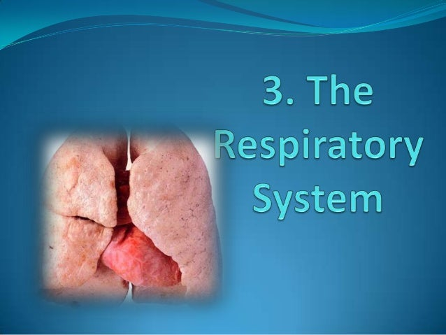 3.1. The key to respiration  COMBUSTION COAL + OXYGEN VAPOUR  ENERGY (HEAT) + CARBON DIOXIDE + WATER  AEROBIC RESPIRATION ...