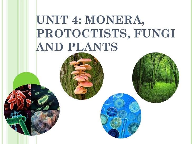 UNIT 4: MONERA, PROTOCTISTS, FUNGI AND PLANTS