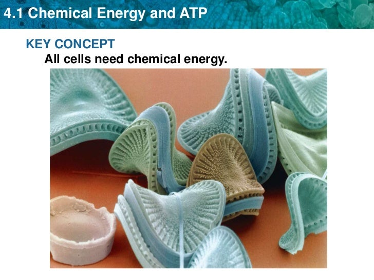 KEY CONCEPT All cells need chemical energy.<br />