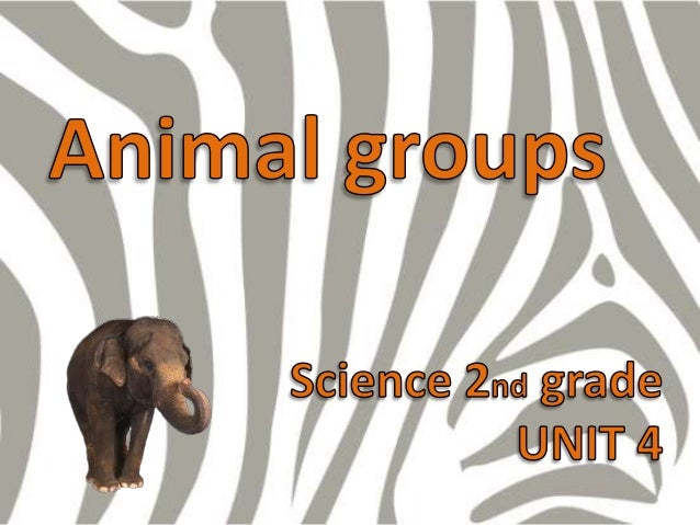 Unit 4 animal groups