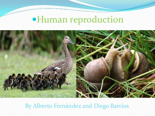Human reproduction By Alberto Fernández and Diego Barrios