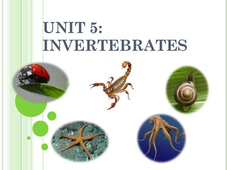 UNIT 5: INVERTEBRATES