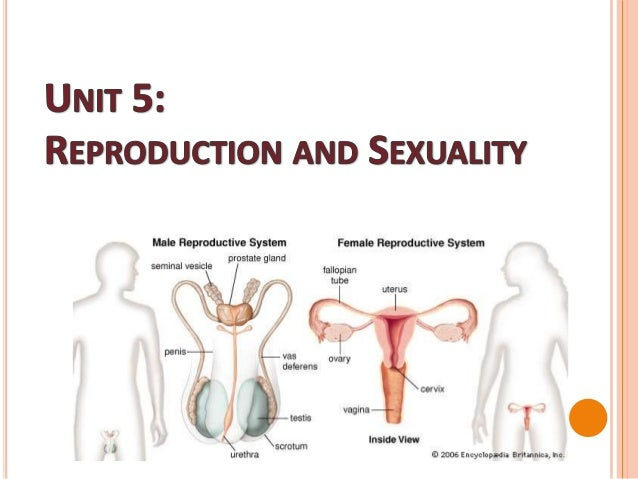 Unit5 reproductionandsexuality