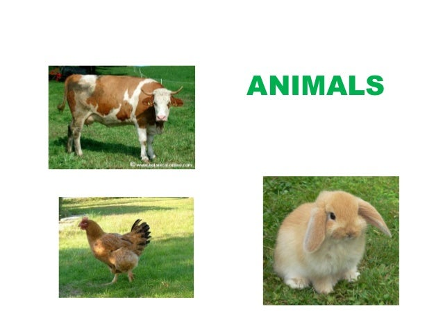 Unit 6. animals