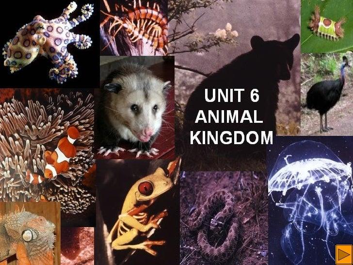 Unit6 animalkingdom-120406055257-phpapp02