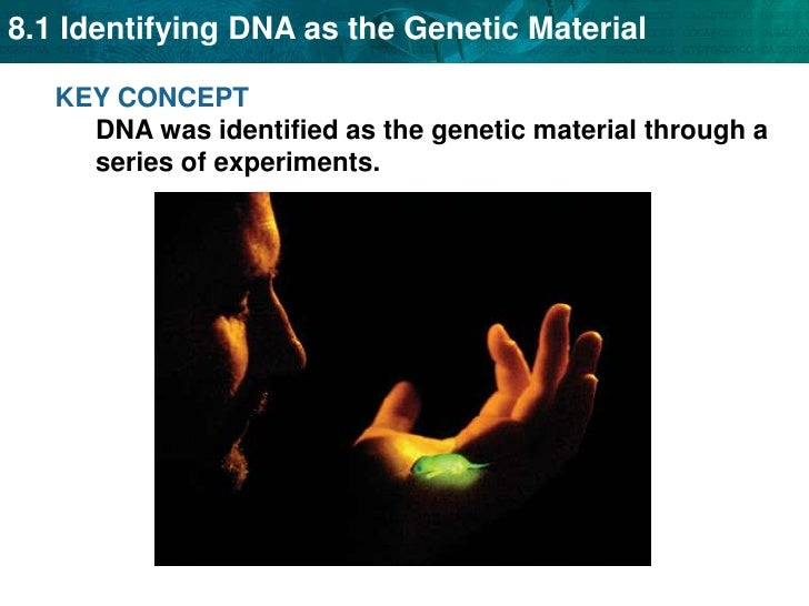 KEY CONCEPT DNA was identified as the genetic material through a series of experiments.<br />