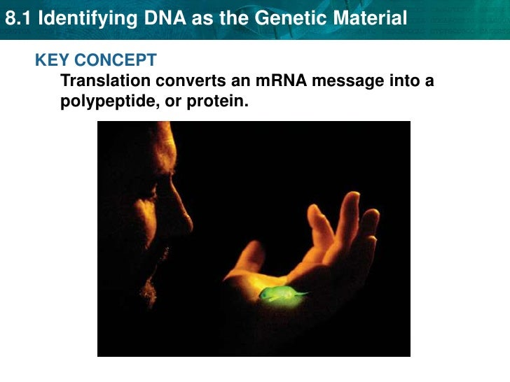 KEY CONCEPT Translation converts an mRNA message into a polypeptide, or protein. <br />