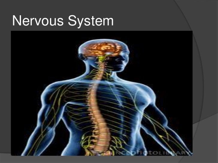 Unit b section  - 3.5 nervous system student copy