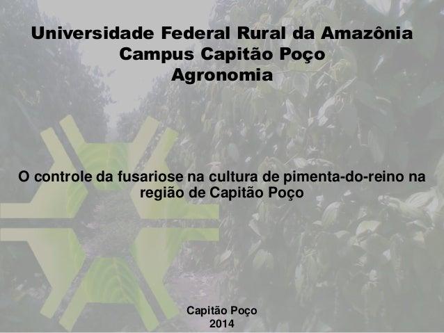 O controle da fusariose na cultura de pimenta-do-reino na região de Capitão Poço Capitão Poço 2014 Universidade Federal Ru...