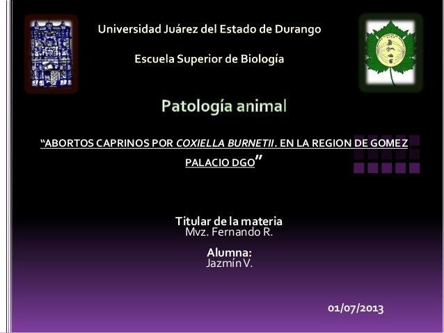 """01/07/2013 Titular de la materia Mvz. Fernando R. Alumna: JazmínV. """"ABORTOS CAPRINOS POR COXIELLA BURNETII. EN LA REGION D..."""