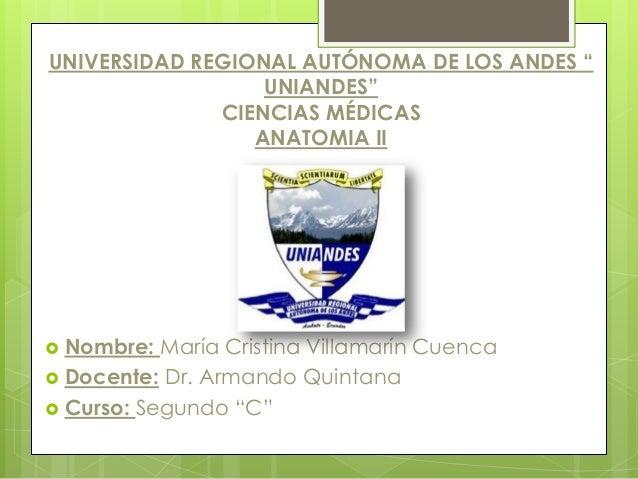 """UNIVERSIDAD REGIONAL AUTÓNOMA DE LOS ANDES """" UNIANDES"""" CIENCIAS MÉDICAS ANATOMIA II  Nombre: María Cristina Villamarín Cu..."""