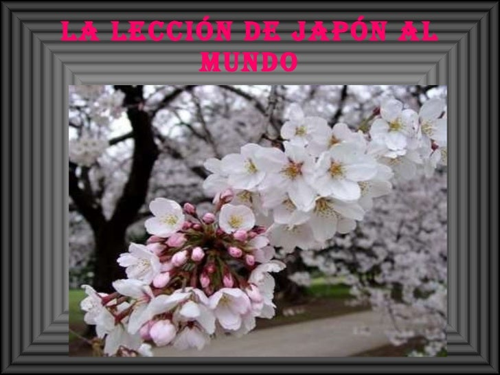 La lección de Japón al mundo
