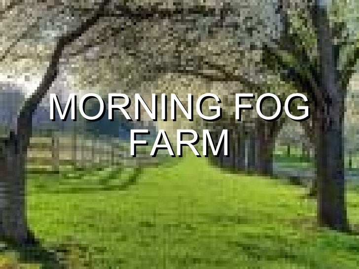 MORNING FOG FARM