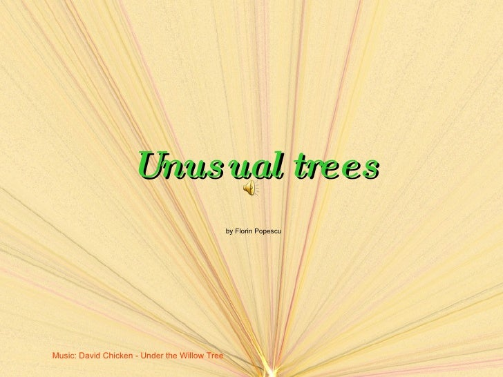 Unusual trees by Florin Popescu Music :  David Chicken - Under the Willow Tree