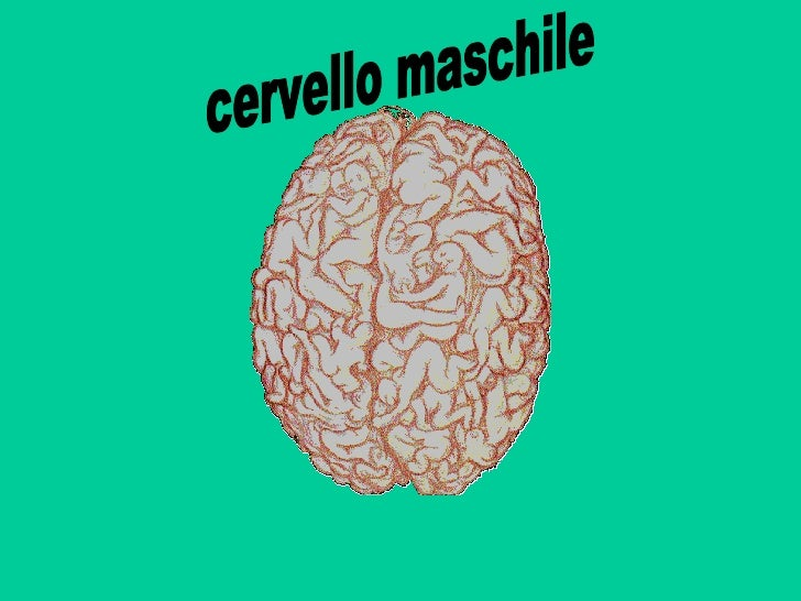 cervello maschile