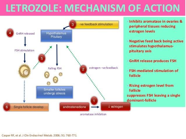 foto What Are Aromatase Inhibitors