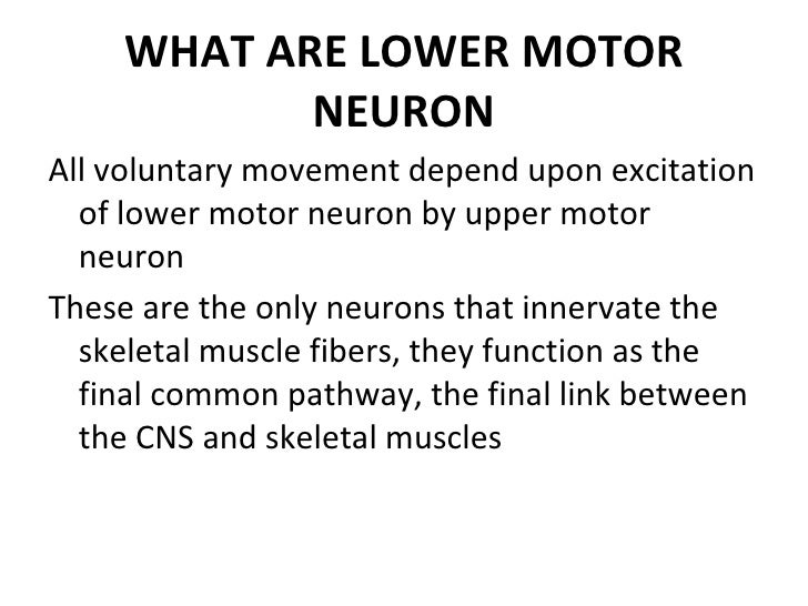 upper and lower motor neurons essay Upper and lower motor neurons essay which then synapses with a lower motor neuron the upper motor neurons originate in the motor region of the.