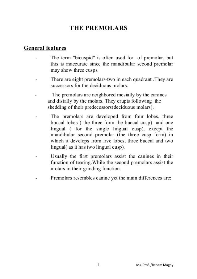 """THE PREMOLARS General features - The term """"bicuspid"""" is often used for of premolar, but this is inaccurate since the mandi..."""