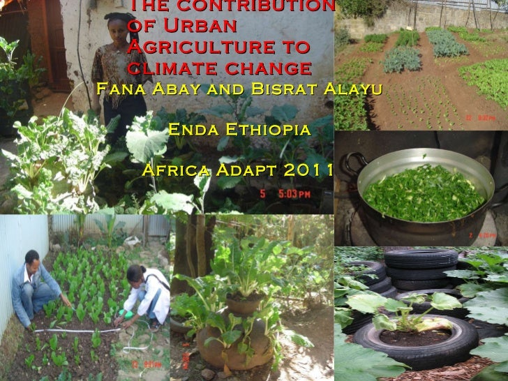 The contribution of Urban Agriculture to climate change  Fana Abay and Bisrat Alayu  Enda Ethiopia Africa Adapt 2011