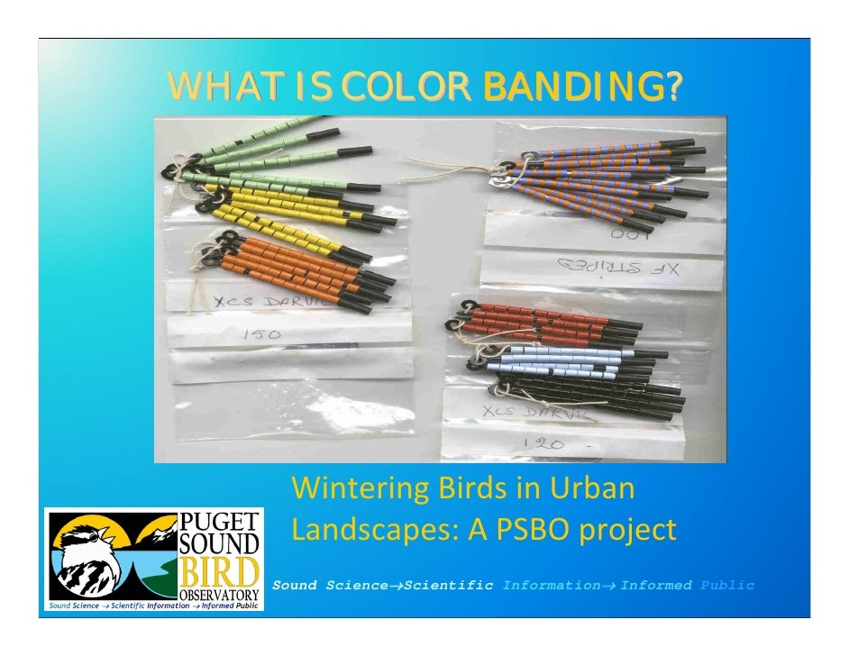 WHAT IS COLOR BANDING?               BANDING?           Wintering Birds in Urban       Landscapes: A PSBO project     Soun...