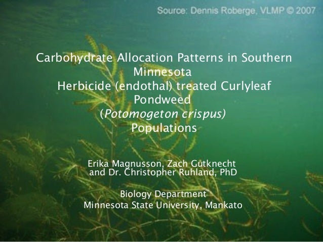 Carbohydrate Allocation Patterns in SouthernMinnesotaHerbicide (endothal) treated CurlyleafPondweed(Potomogeton crispus)Po...
