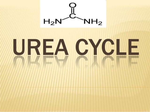 Urea cycle2