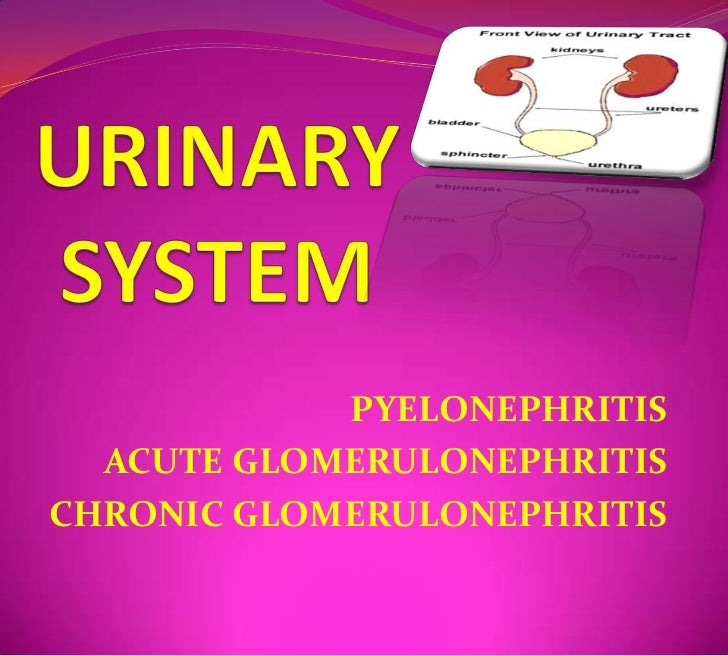 URINARY SYSTEM<br />PYELONEPHRITIS<br />ACUTE GLOMERULONEPHRITIS<br />CHRONIC GLOMERULONEPHRITIS<br />