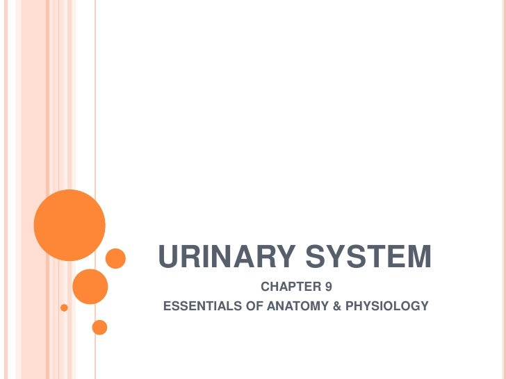 URINARY SYSTEM<br />	        CHAPTER 9<br />         ESSENTIALS OF ANATOMY & PHYSIOLOGY<br />