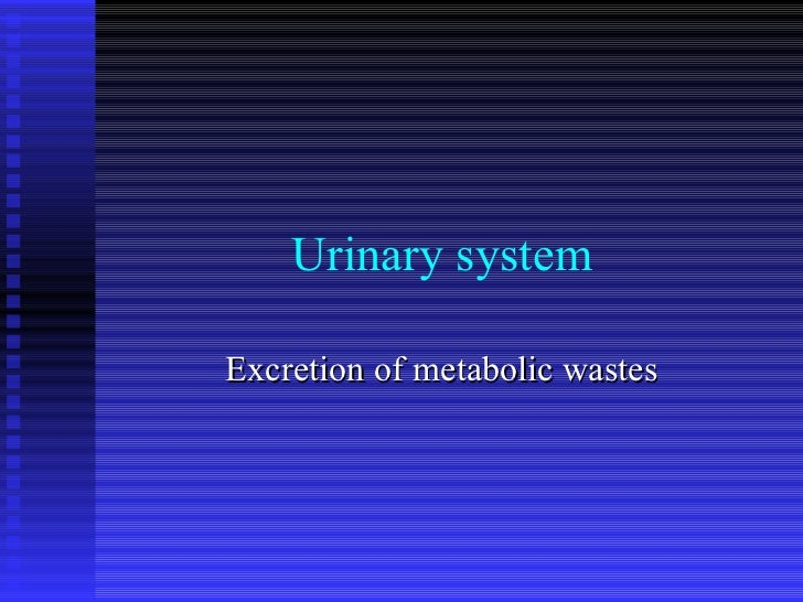 Urinary system Excretion of metabolic wastes
