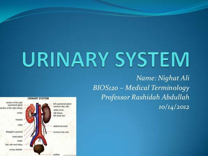 Urinary system medical term