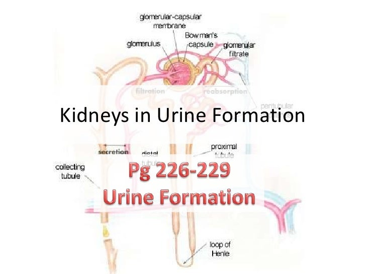 Urine formation osmo regulation