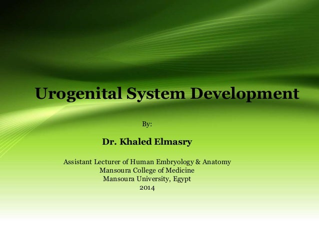 Urogenital System Development By: Dr. Khaled Elmasry Assistant Lecturer of Human Embryology & Anatomy Mansoura College of ...