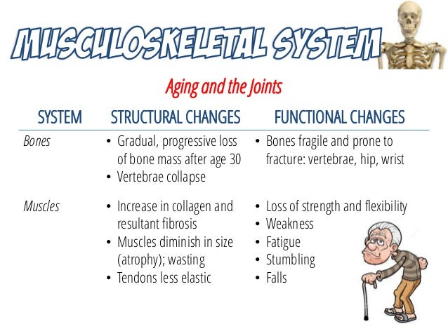 the aging musculoskeletal system Sarcopenia, the atrophy and deterioration of skeletal muscle that leads to  weakness and fatigue, is a major and debilitating consequence of aging  moreover.
