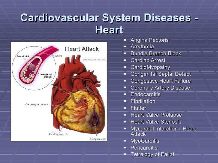 write essay cardiovascular system The circulatory system is an organ system which is best imagined as the transportation system we can write a custom essay on the circulatory system essay sample.