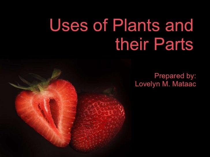 Uses of Plants and their Parts <ul><li>Prepared by: </li></ul><ul><li>Lovelyn M. Mataac </li></ul>
