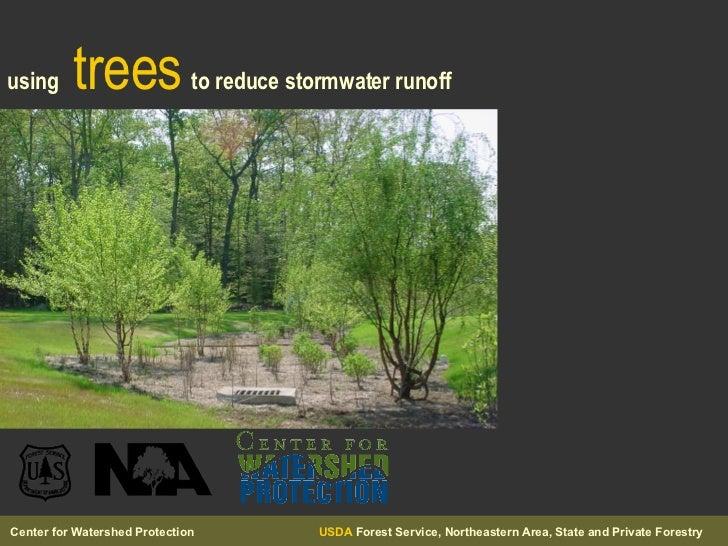 using   trees   to reduce stormwater runoff